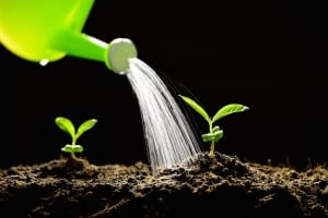 increase organic website blog traffic